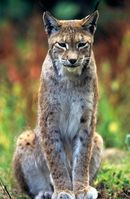 Bild: David Lawson / WWF
