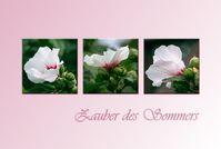 Bild: bearbeitung: lillysmum / fotos dieter hopf (mit freundlicher genehmigung) / pixelio.de