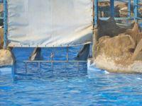 """Delfinarium """"Dolphin World"""". Bild: Wal- und Delfinschutz-Forum (WDSF)"""