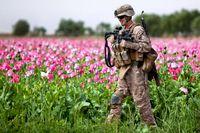 Soldat des U.S. Marine Corps in einem Mohnfeld in Afghanistan (2011), Archivbild
