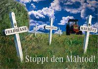 Bild: obs/Deutsche Wildtier Stiftung