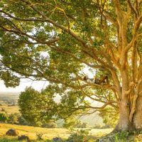 Bäume haben einen ″Herzschlag″