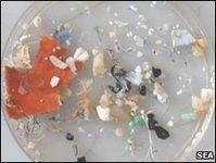 Viele Lebewesen fressen diese Plastikteilchen (Foto: Sea Education Association)