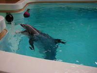 Großer Tümmler im Delfinarium, 2003