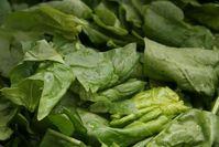 """Ein guter Salat muss frisch, gesund, knackig und lecker sein. Aber woher weiß ein Lebensmittelhersteller, dass dies bei einer neuen Rezeptur der Fall ist? Das EU-geförderte Forschungsprojekt """"SOPHY"""" entwickelt eine Software, die Vorhersagen zur Sicherheit, Qualität und Haltbarkeit von Lebensmitteln trifft. Quelle: Foto: ttz Bremerhaven (idw)"""