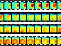 Durch das Vogelhirn von links oben nach rechts unten wandernde Nervenzell-Aktivität. Jedes Bild zeig Quelle: MPI f. Ornithologie/ Rattenborg (idw)