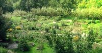 Ein Permakultur Garten / Landwirtschaft (Symbolbild)