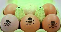 Giftige Eier auf giftiger Hühnerhaltung