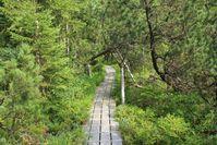 Großer Filz im Nationalpark Bayerischer Wald