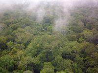 Pflanzensalze in Regenwaldwolken: An Kaliumsalzen aus Pilzen und Pflanzen kondensieren organische Substanzen, so dass Aerosolpartikel entstehen. An diesen bilden sich Nebel- und Wolkentröpfchen. Wie und warum Pilze und Pflanzen die schwerflüchtigen anorganischen Salze freisetzen, ist bislang nicht klar. Quelle: Bild: Christopher Pöhlker / MPI für Chemie (idw)