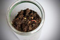 """Forscher der Universität Bayreuth haben bei Proben bis zu 900 Plastikpartikel in nur einem Kilo Kompost gefunden. Bild: """"obs/ZDF/Michael Nieberg"""""""