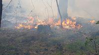 Das Feuer im Unterholz Bild: Feuerwehr