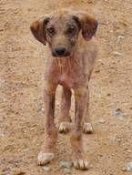 Heimatloser Hund in Istanbul Bild: PETA