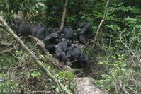 Schimpansen sind mit einigen Gruppenmitgliedern befreundet, mit anderen nicht. In jedem Fall behalte Quelle: Roman Wittig (idw)