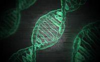 Chromosome: Unterschiede wirken sich stark aus.