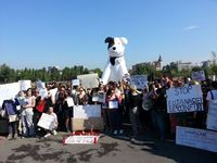 Protest gegen das Töten der Streunerhunde in Rumänien. Bild:  (c) George Nedelcu, VIER PFOTEN