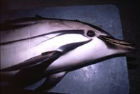 Gesellschaft zur Rettung der Delphine e.V. (GRD)