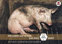 Bild: VIER PFOTEN – Stiftung für Tierschutz