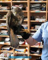 Passanten hatten den Vogel an Johanniskreuz gefunden und zur Polizei gebracht.