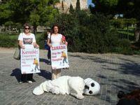 PETA demonstriert in Athen gegen das größte Abschlachten von Meeressäugern weltweit. Bild: PETA