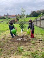 Nora und Erik haben in ihrem Garten bei Mansfeld zwei junge Obstbäume gepflanzt, damit sie bald Birnen und Aprikosen ernten können. Bild: Tag der Deutschen Einheit Fotograf: Christin Winklert