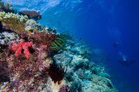 Korallenriffe – hier das Great Barrier Reef – sind extrem artenreiche Lebensräume. Quelle: Simon Gingins (idw)