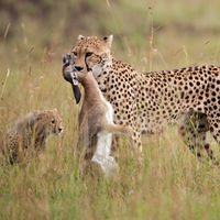 © naturepl.com / Anup Shah / WWF-Canon Bild: WWF - World Wide Fund For Nature (pressrelations)