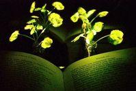 Brunnenkresse mit leuchtenden Blättern zum Lesen von Büchern. Bild: web.mit.edu