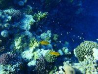 Bunte Korallenriffe: Bald nur noch in Aquarien zu bewundern. Bild: tokamuwi/pixelio.de