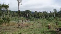 Waldbereiche am Rand vieler tropischer Schutzgebiete werden durch illegalen Holzeinschlag zunehmend abgeholzt, wie beim Lore Lindu Nationalpark in Sulawesi, Indonesien. Quelle: (Foto: Christian H. Schulze) (idw)