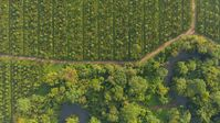 Kakaoanbau im Agroforstsystem. Eine Mischkultur, die der Artenvielfalt und dem Klima nutzt.  Bild: Alfred Ritter GmbH & Co. KG Fotograf: Alfred Ritter GmbH & Co. KG