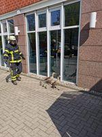 Gänsefamilie mit Küken Bild: Feuerwehr