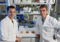 Die verantwortlichen Wissenschaftler des neuen Forschungsprojekts Prof. Dr. Stefan Lorkowski (l.) und Prof. Dr. Michael Glei. Quelle: Foto: Jan-Peter Kasper/FSU (idw)