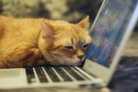 Katze schläft auf Laptop