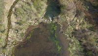 Luftaufnahme eines Biberdamms mit Staubereich im Bereich der Mündung der Dorfen in die Isar. Im flachen Gelände entstehen große Teiche. Quelle: Bild: Hochschule Weihenstephan-Triesdorf (idw)