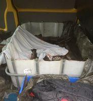 Bundespolizei entdeckt 520 kg ungekühlten Fisch. Bild: Bundespolizei