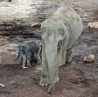 Elefanten im Kölner Zoo (Symbolbild)