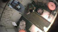 """Tierquälerei dokumentiert: Youtuber & Tierrechtler decken massive Gesetzesverstöße in Ferkelzuchtbetrieb auf /Bild: """"obs/Deutsches Tierschutzbüro e.V."""""""