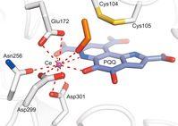 Die Methanol-Dehydrogenase des Bakteriums Methylacidiphilum fumariolicum nutzt das Seltene Erden Met Quelle: MPI f. medizinische Forschung/Barends (idw)