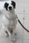 Hund mit Stachelhalsband. In Österreich und in der Schweiz ist diese grausame Methode der Hundeerziehung bereits verboten. Bild: VIER PFOTEN
