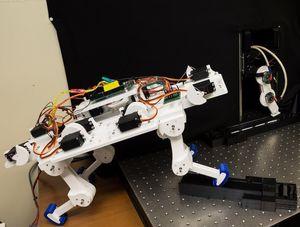 Neuartiger Katzenroboter mit selbstlernenden Beinen.
