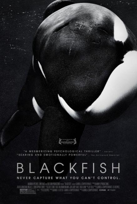 """BLACKFISH"" Kinoplakat"