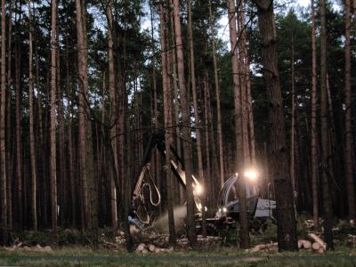 Industriewald: In der Regel ein Verlustgeschäft für Besitzer, Menschen in der Umgebung und die Natur (Symbolbild)
