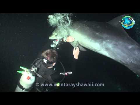 "Screenshot aus dem Youtube Video ""Dolphin Rescue Hawaii.mp4"""