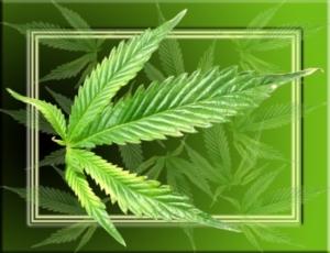 Cannabis ist eine vielseitige Pflanze. Bild: pixelio.de/Kokopelli