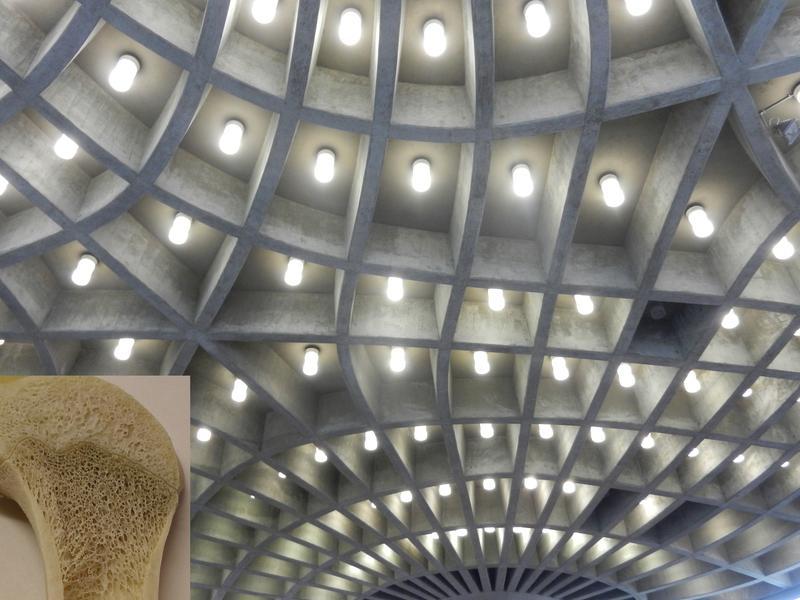 Die Decke des ehemaligen Zoologiehörsaals in der Albertraße 21 in Freiburg. Quelle: Quelle: Plant Biomechanics Group Freiburg (idw)