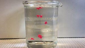 Verfestigte Emulsionspartikel in warmem Wasser.